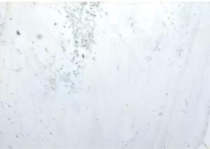 ENGLISH WHITE M0259